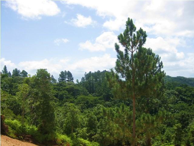 Eco Parque del Tanama, Utuado PR Gallery